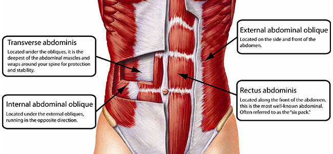 abs-anatomy-muscles-2